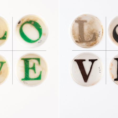 Jennifer Willet Biotechnology Is A Technology Of Love… , 2012, Photo Credit: Arturo Herrera