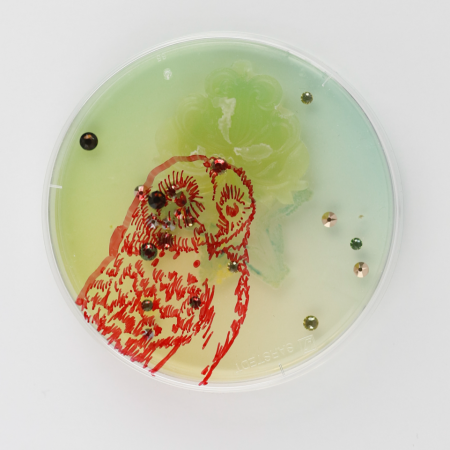 Jennifer Willet, Baroque Biology